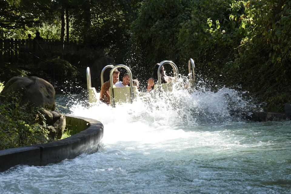Dino-Raft