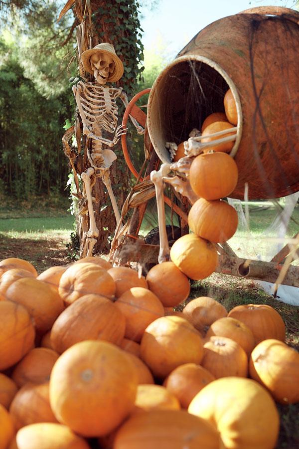 Squelette et citrouilles